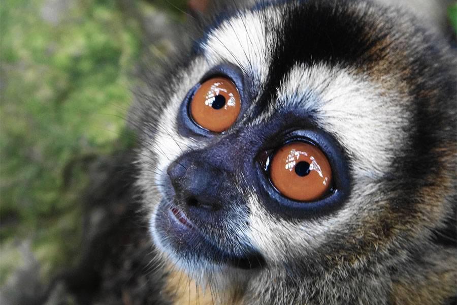 В Московском зоопарке впервые родилась редкая боливийская мирикина