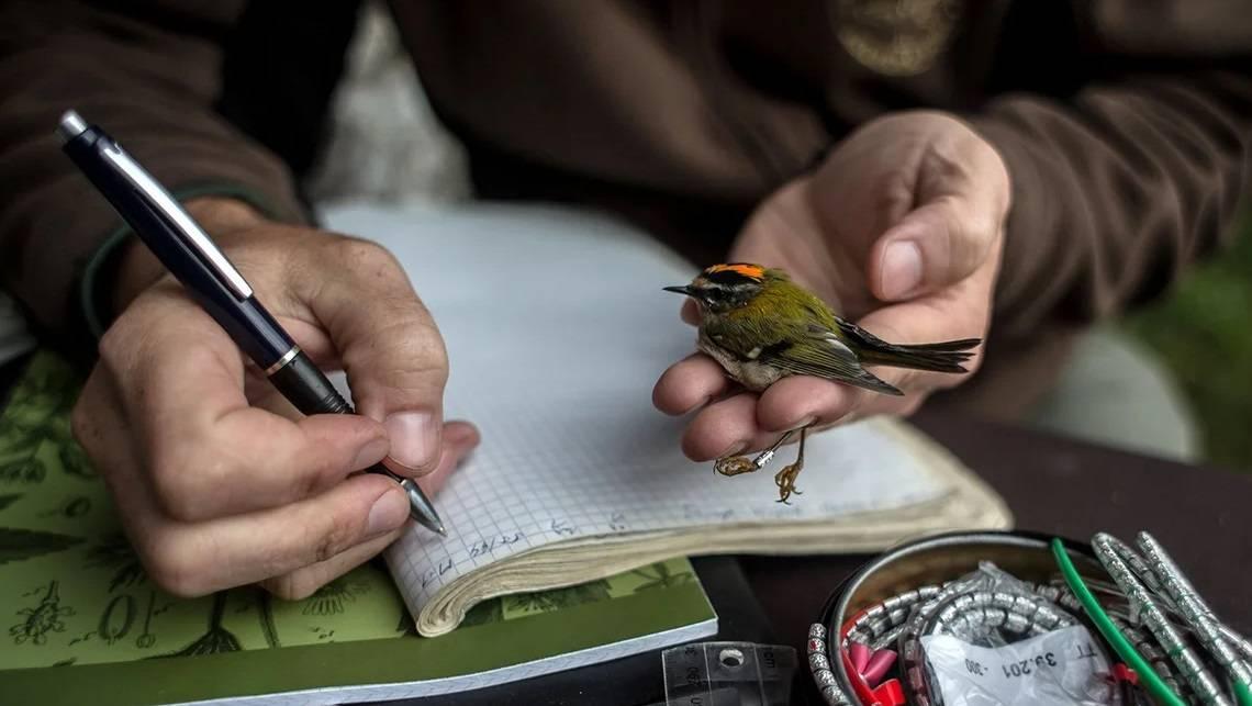 19 февраля - День орнитолога в России