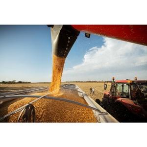 Гибрид кукурузы Pioneer установил новый мировой рекорд по урожайности