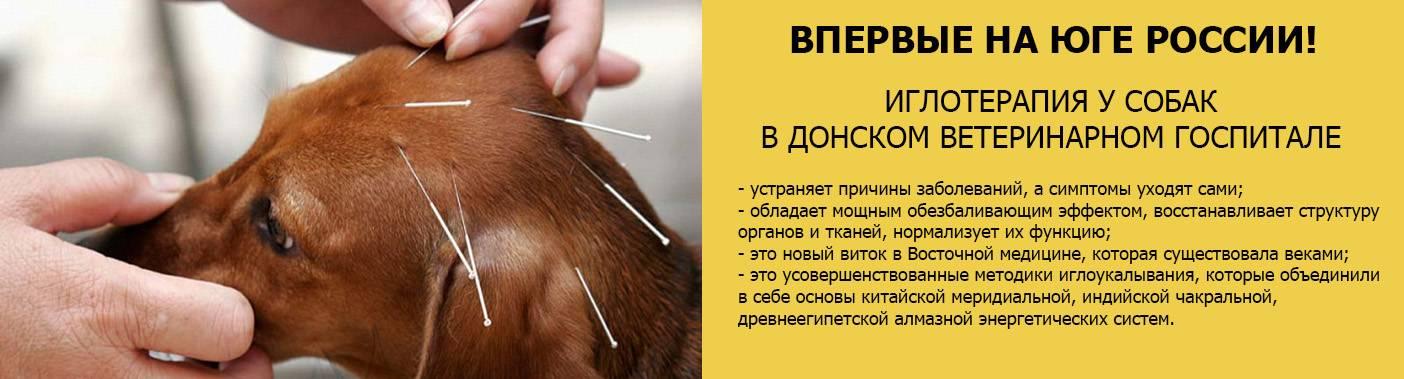 """Форум """"Донского ветеринарного госпиталя"""""""