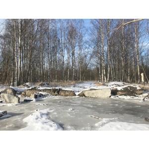 ОНФ призвал власти Петрозаводска привести в порядок городские парки