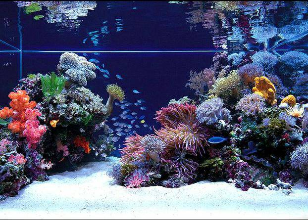 Стать счастливым владельцем морского аквариума может себе позволить далеко не каждый.