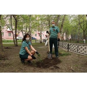 Возле Новосибирской таможни появился «Сад памяти»