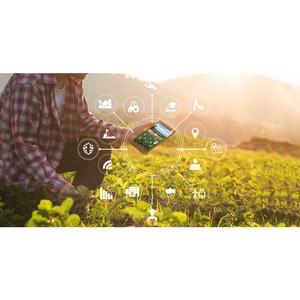 РСХБ поможет фермерам проводить дистанционный мониторинг полей