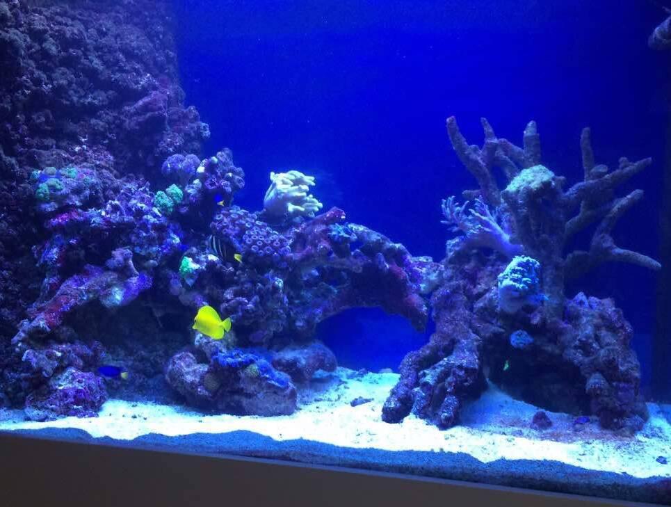 Наличие в рабочем помещении аквариума благотворно скажется на производительности труда.