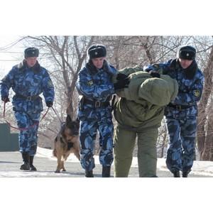 13 мая - День охранно-конвойной службы МВД России (День конвоира)
