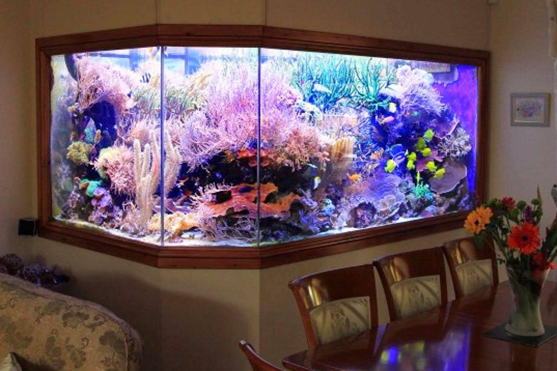 Обслуживание аквариума берём на себя.