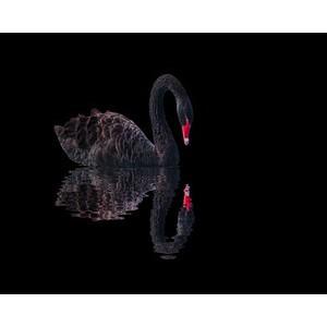 Попытка решения психологической задачи Черного лебедя