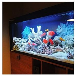 Какой выбрать аквариум?