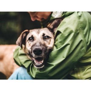 Волонтеры Москвы возвращаются в приюты для бездомных животных