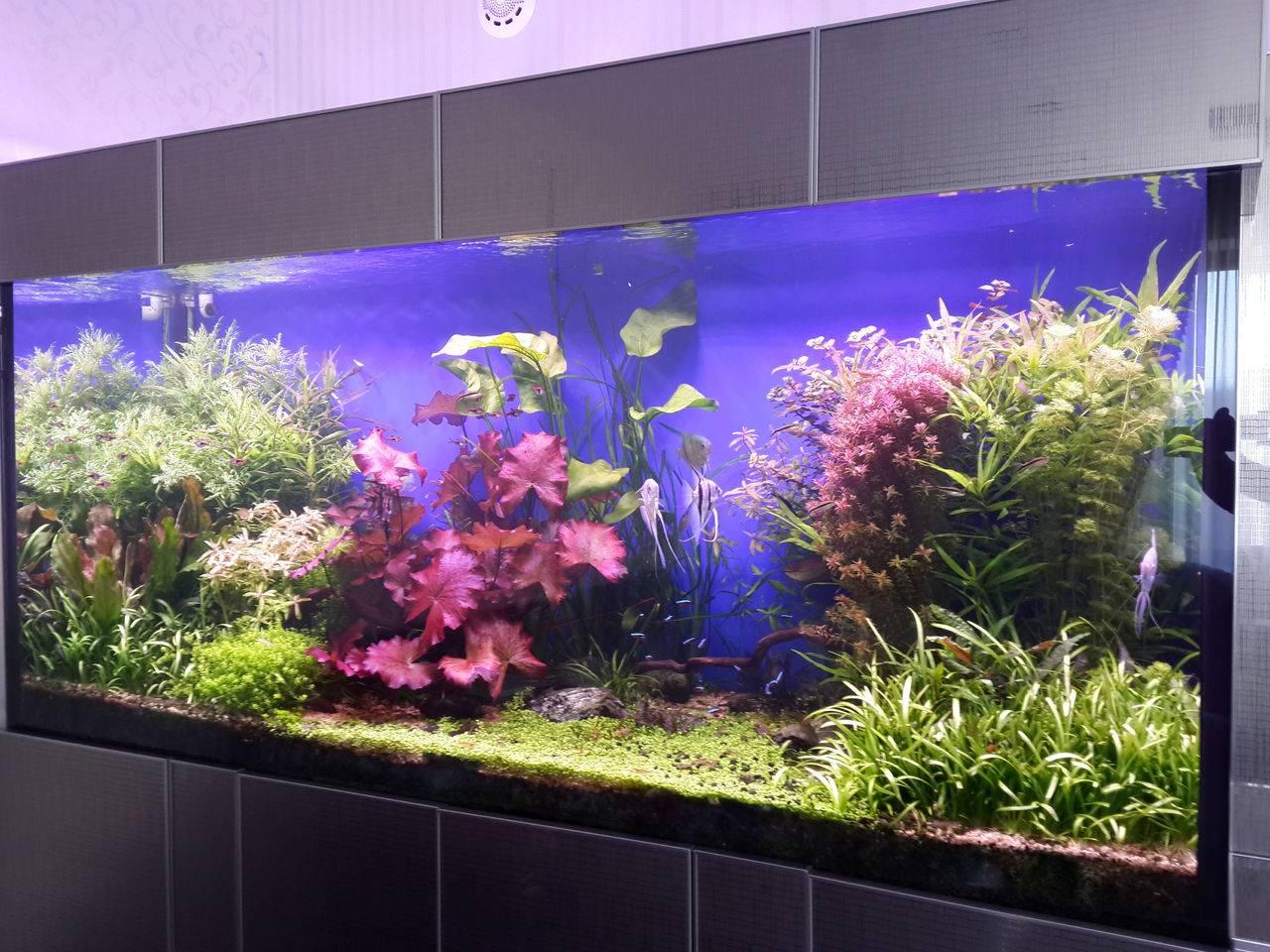 Эксклюзивный аквариум.