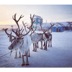 Минвостокразвития готовит меры поддержки для МСП в Арктике