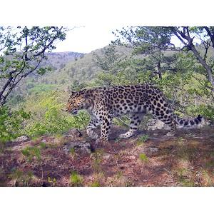 Brother становится Хранителем дальневосточного леопарда
