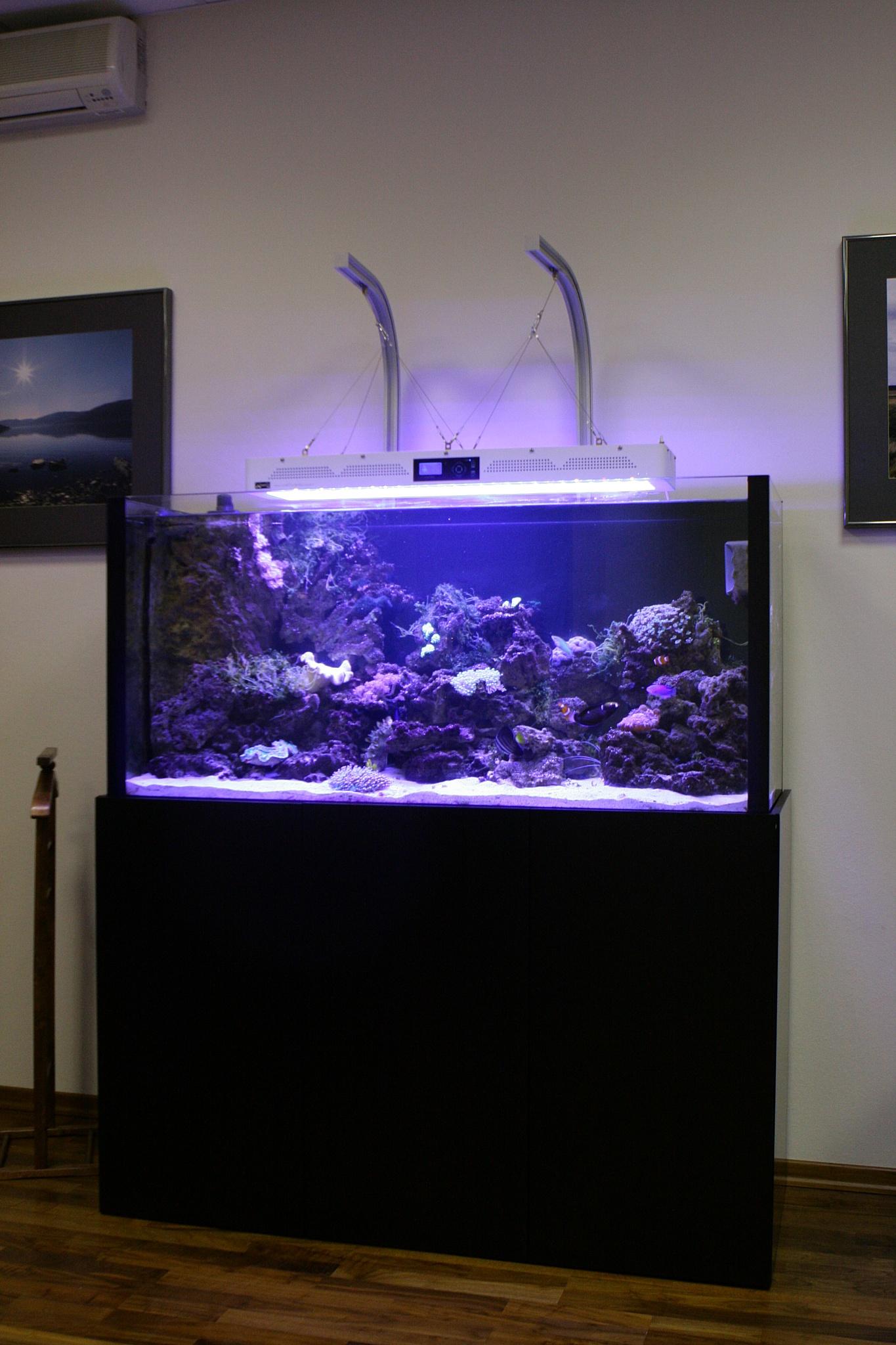 Морской аквариум.