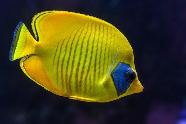 Как правильно кормить аквариумных рыб?