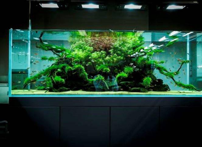 Главный вопрос при установке большого аквариума