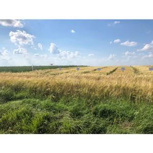 Аграрии обсудили выращивание пивоваренного ячменя в Нечерноземье