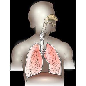 Две трети курильщиков умирают от болезней, вызванных табачным дымом