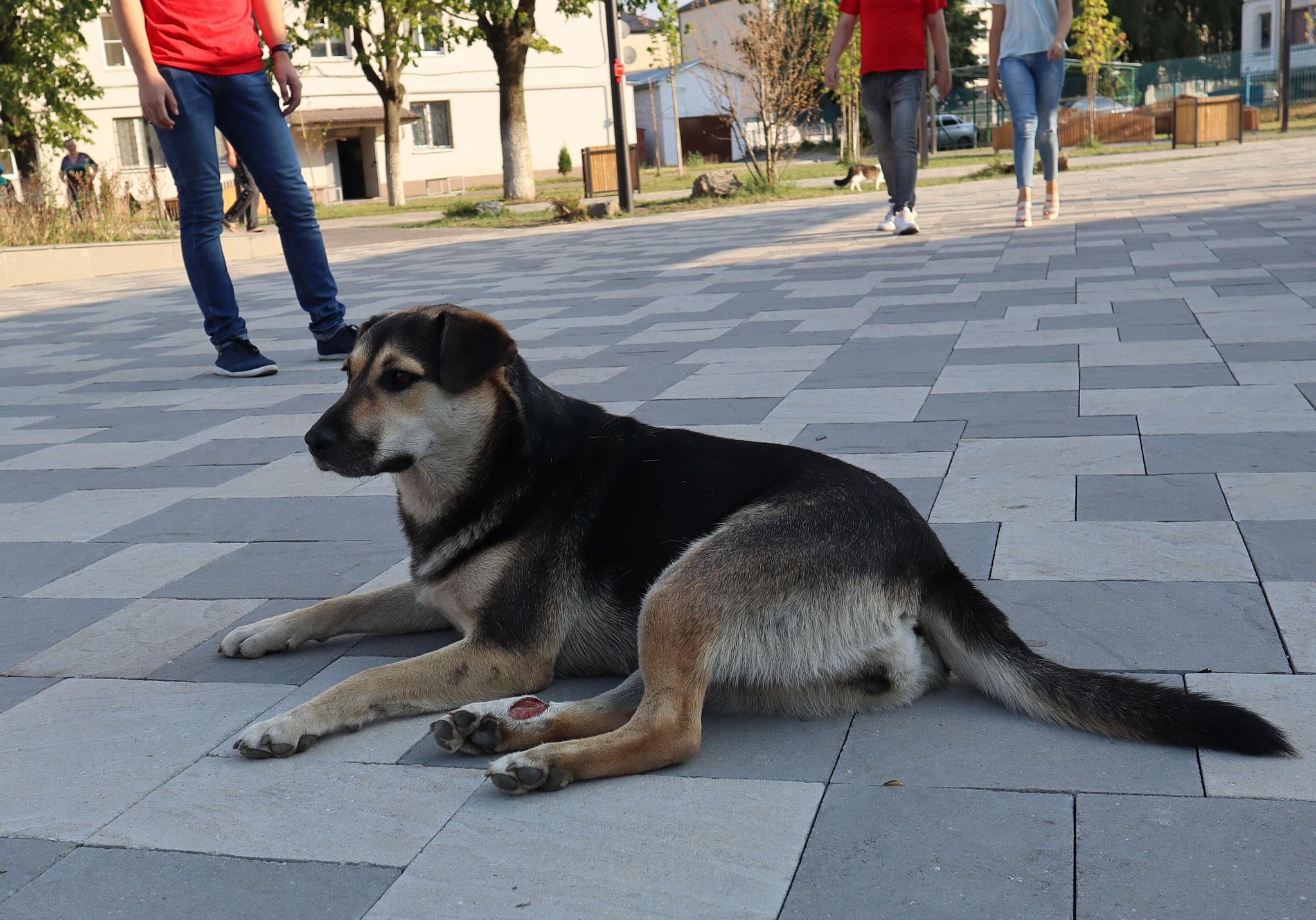 ОНФ призвал власти КБР обеспечить контроль над безнадзорными животными