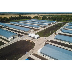 Тамбовэнерго обеспечил предприятия АПК электросетевой инфраструктурой