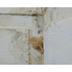 ОНФ в Коми добивается ремонта дома в селе, где на стенах растут грибы