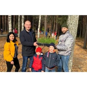 Активисты ОНФ Коми высадили в детском парке в Ухте сто саженцев сосны