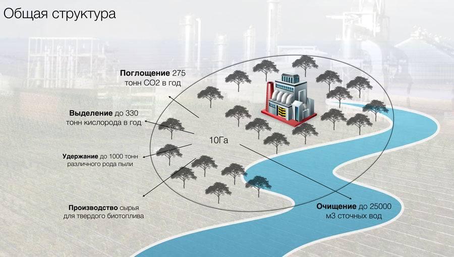 Природные Очистительные Заводы  - это сравнительно масштабная высадка на территории от 1 Га в непосредственной близости к таким предприятиям быстрорастущих деревьев Павловния.
