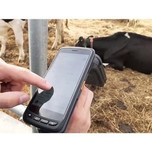 RFID ридеры Chainway используются в системе учета поголовья животных
