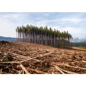 700 га леса в Одинцовской районе отданы под застройку