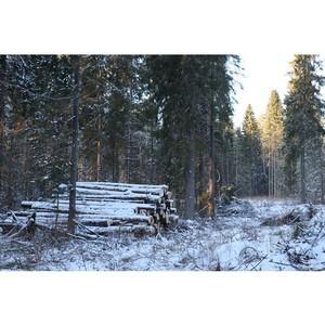 ОНФ в Кирове проверяет законность вырубки деревьев в Порошино