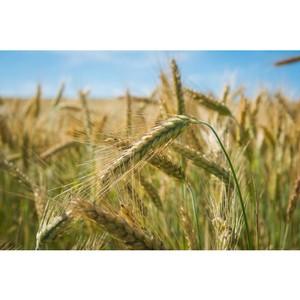Фермеры знают, чем порадовать сладкоежек и адептов ЗОЖ в СПб и ЛО