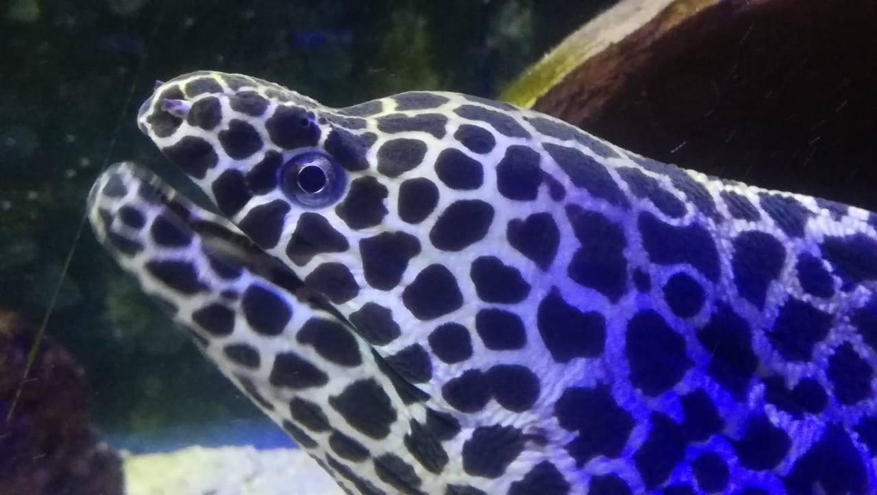 Моской аквариум с хищниками