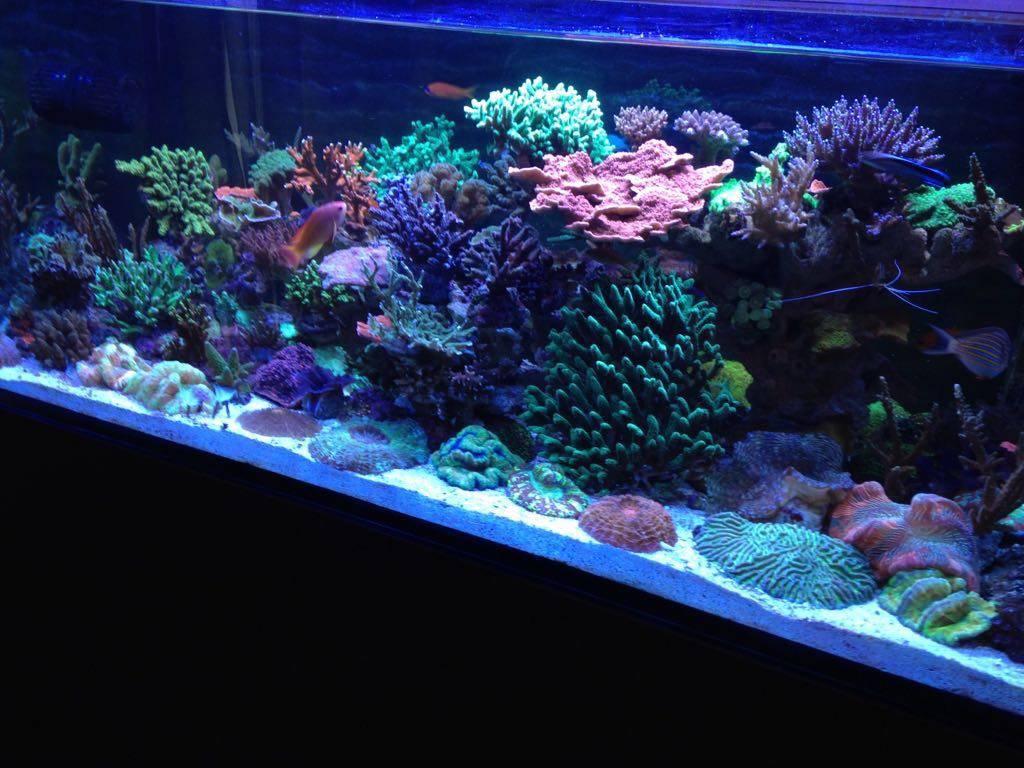 Рифовый морской аквариум