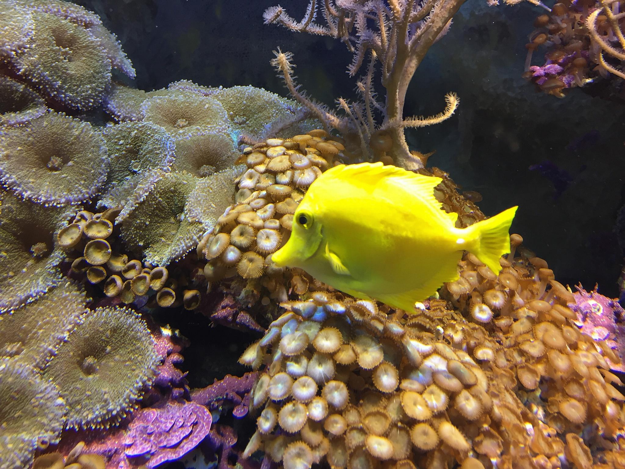 Животный мир морского аквариума в вашем доме
