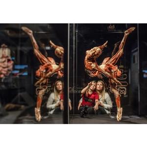 Всемирно известная выставка Body Worlds приезжает в Россию