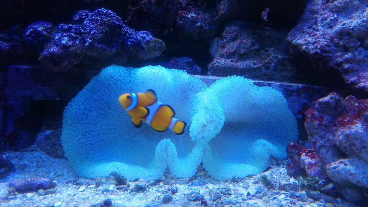 Мой первый морской аквариум
