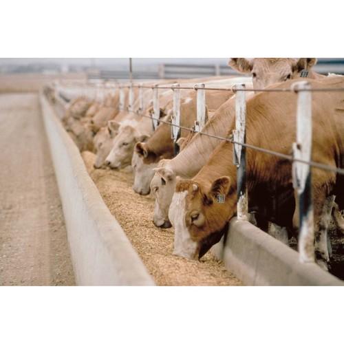 Как откорм влияет на вкус мяса? Рассказывают эксперты мясного бренда