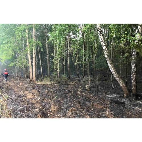 Электроснабжение в эпицентре лесных пожаров под контролем энергетиков