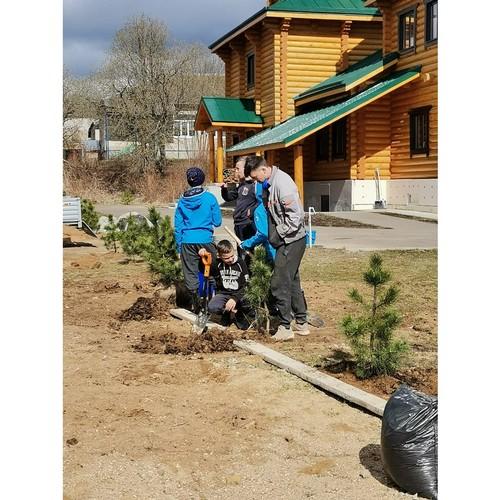 150 кедров посадили сотрудники и волонтеры «Чартер Грин Лайт Москва»