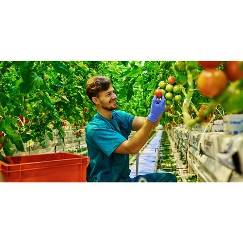 РСХБ рассказал о возможностях летней занятости студентов в АПК