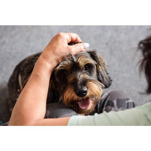 В Таганроге отобрали собак в проект «Волонтер – это звучит гордо!»