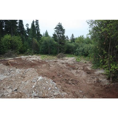 Забетонированный лес в Чистых прудах Кирова начали приводить в порядок