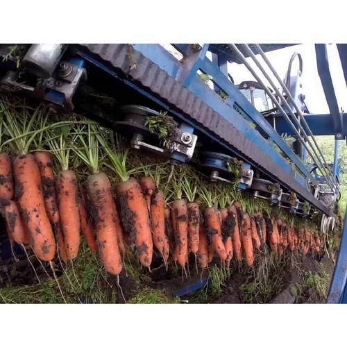 Ход уборочных работ и цены на овощи обсудили в Минсельхозе