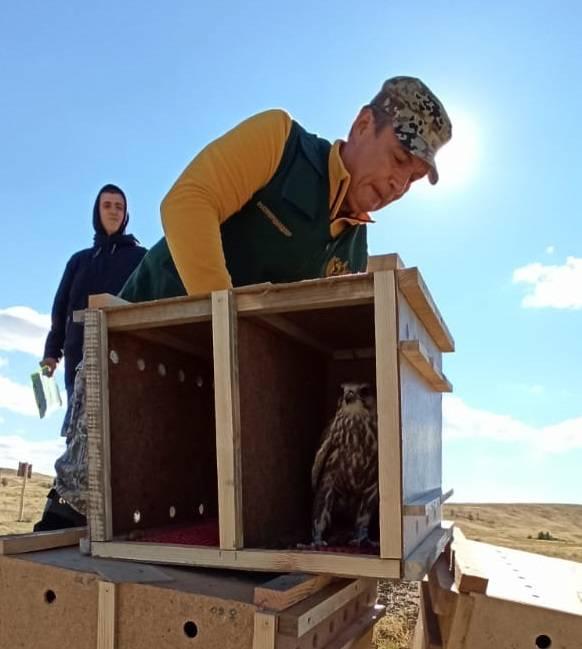«Стальное дерево» помогает спасать соколов-балобанов на Южном Урале