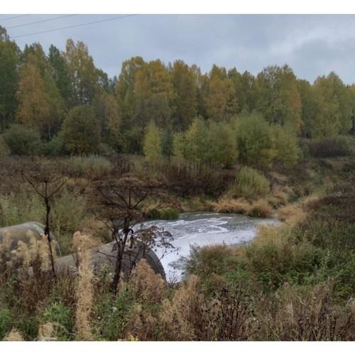 ОНФ направили обращение по факту загрязнений реки Куринки