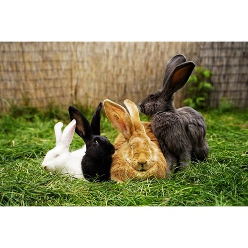 В Москве открывается «Зайкин дом» с 40 видами кроликов