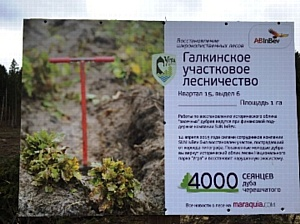 Сотрудники «САН ИнБев» восстановили участок леса в Национальном парке Угра