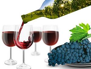 Novello delle Vivene из Италии – праздник молодого вина начинается