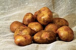 День картофеля в Киеве