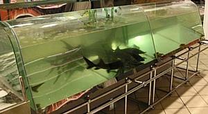 Как выбрать торговый аквариум?